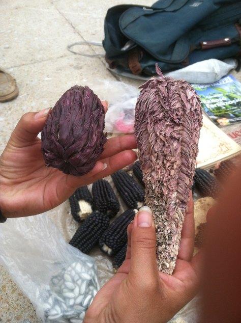 Maíz tunicado, foto de Jair Trejo